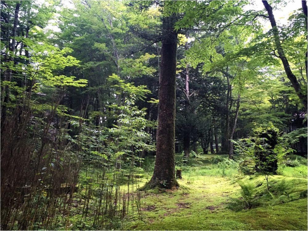 軽井沢女子旅特集 - 日帰り旅行も! 自然を満喫できるモデルコースやおすすめグルメ、人気の星野リゾートまとめ_30