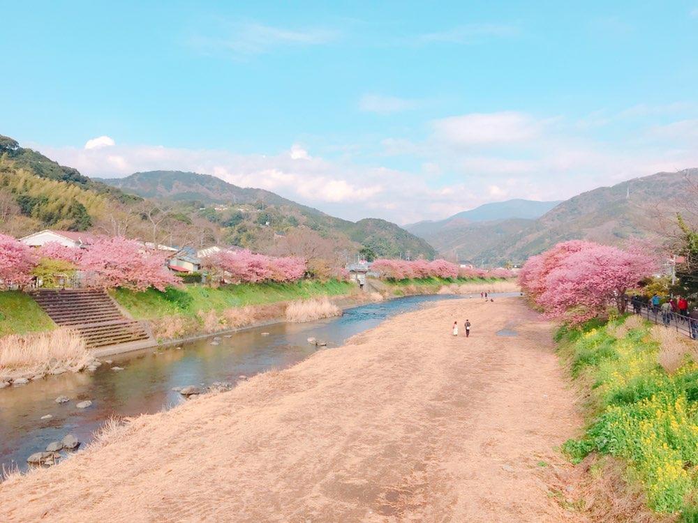 今が見頃❤︎3月なのに桜を楽しめる!河津桜を見に行ってきました*・゜゚・*:.。..。.:*・_2