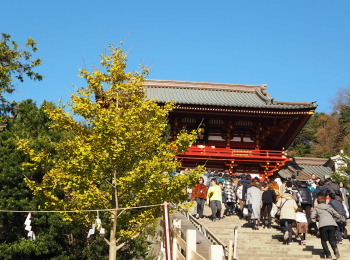 【#秋の鎌倉さんぽ】紅葉の鶴ヶ丘八幡宮♡ あの銀杏に会えるカフェ。