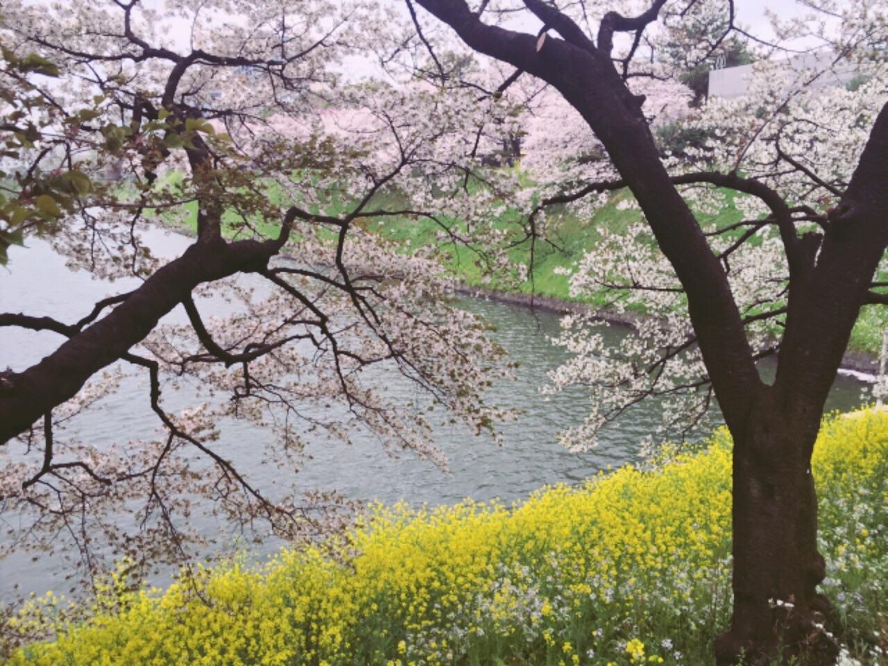 桜の命は短し、恋せよ乙女。_3