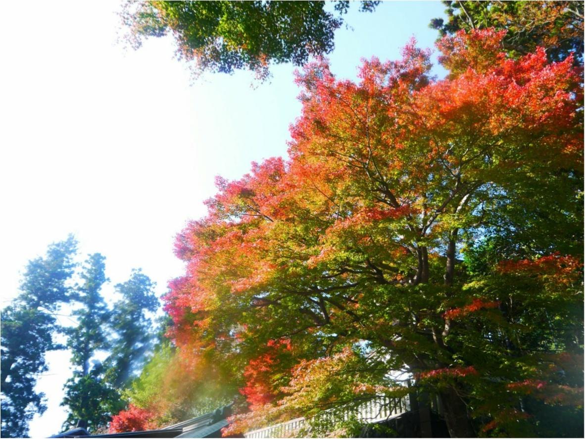 【しの散歩】世界一登山客が多い山!東京の紅葉スポットといえば、やっぱり『高尾山』がおすすめ♪_6