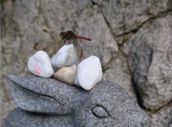 ≪関西・日帰り旅行≫鳥取旅 最後は神話&恋人の聖地で健康・良縁祈願☆