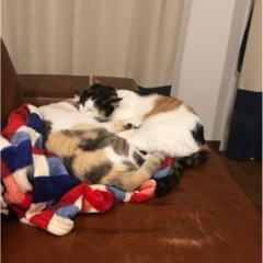 【今日のにゃんこ】あったかいにゃ~。ゆきちゃんとちよちゃんは仲良くお昼寝