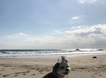 【今日のわんこ】「冬の海最高だわん♡ 」元気いっぱいの太郎くん