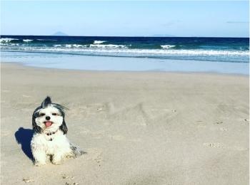 【今日のわんこ】夏はやっぱり♡♡ 海にやってきた太郎くん