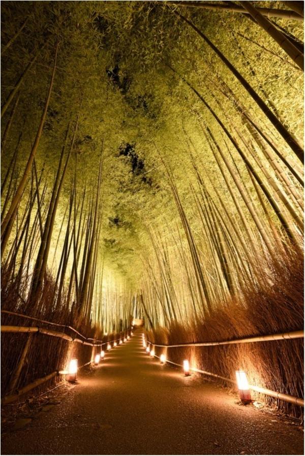 """大阪城ナイトウォーク「サクヤルミナ」も、「京都・嵐山花灯路-2018」も行きたすぎる! 関西の""""幻想的な夜""""が気になる♡_1"""