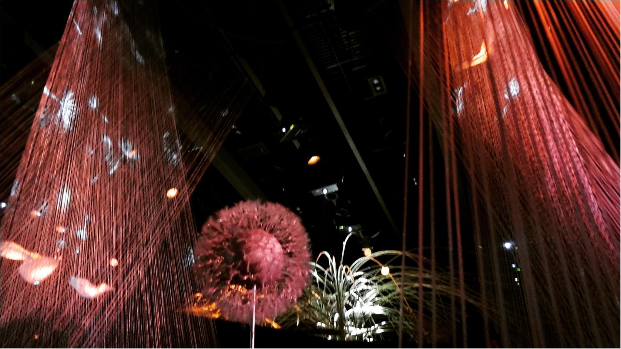 今年も開催中!通算15万人動員の日本一早いお花見イベント「 FLOWERS by NAKED 2017 ー立春ー」@日本橋≪samenyan≫_3