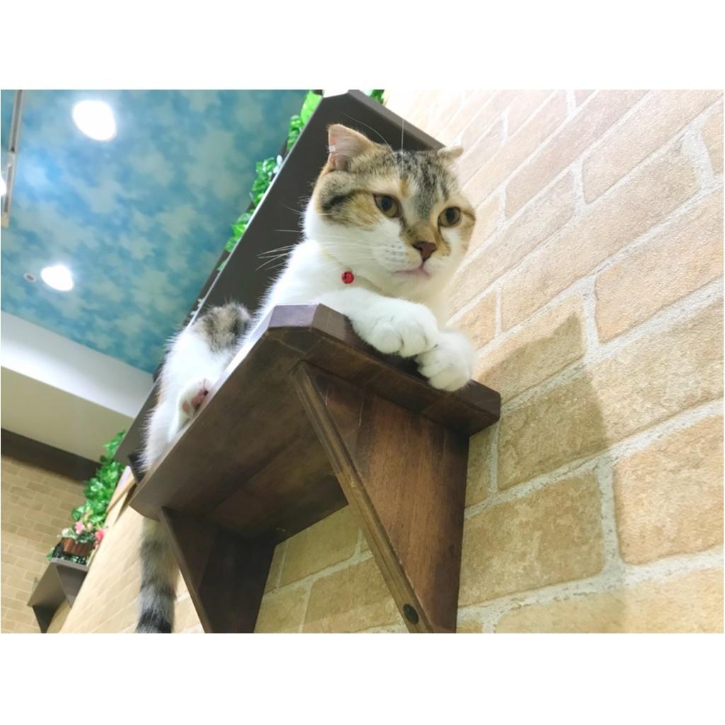 【空前の猫ブーム】首都圏内オススメの猫カフェ教えちゃいます!@横浜店レポ_4