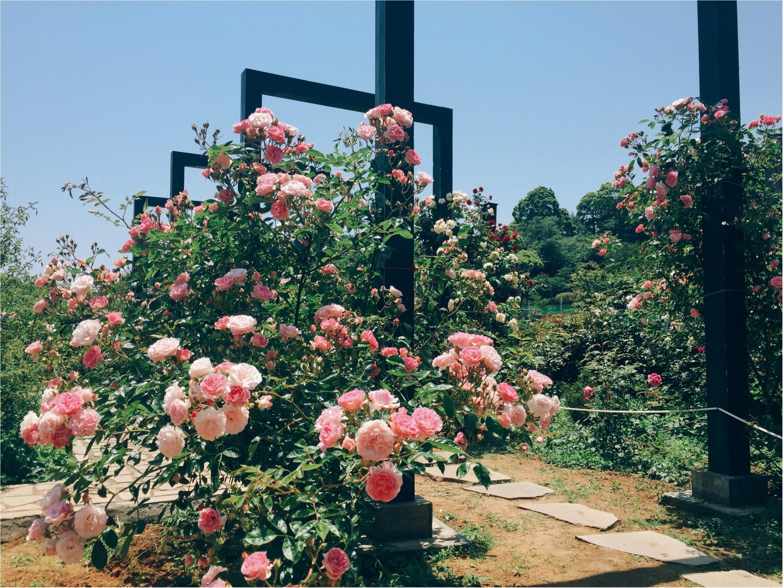 【お出掛けスポットin熱海】今が見頃のローズガーデン!薔薇のトンネルにうっとり…♡_5
