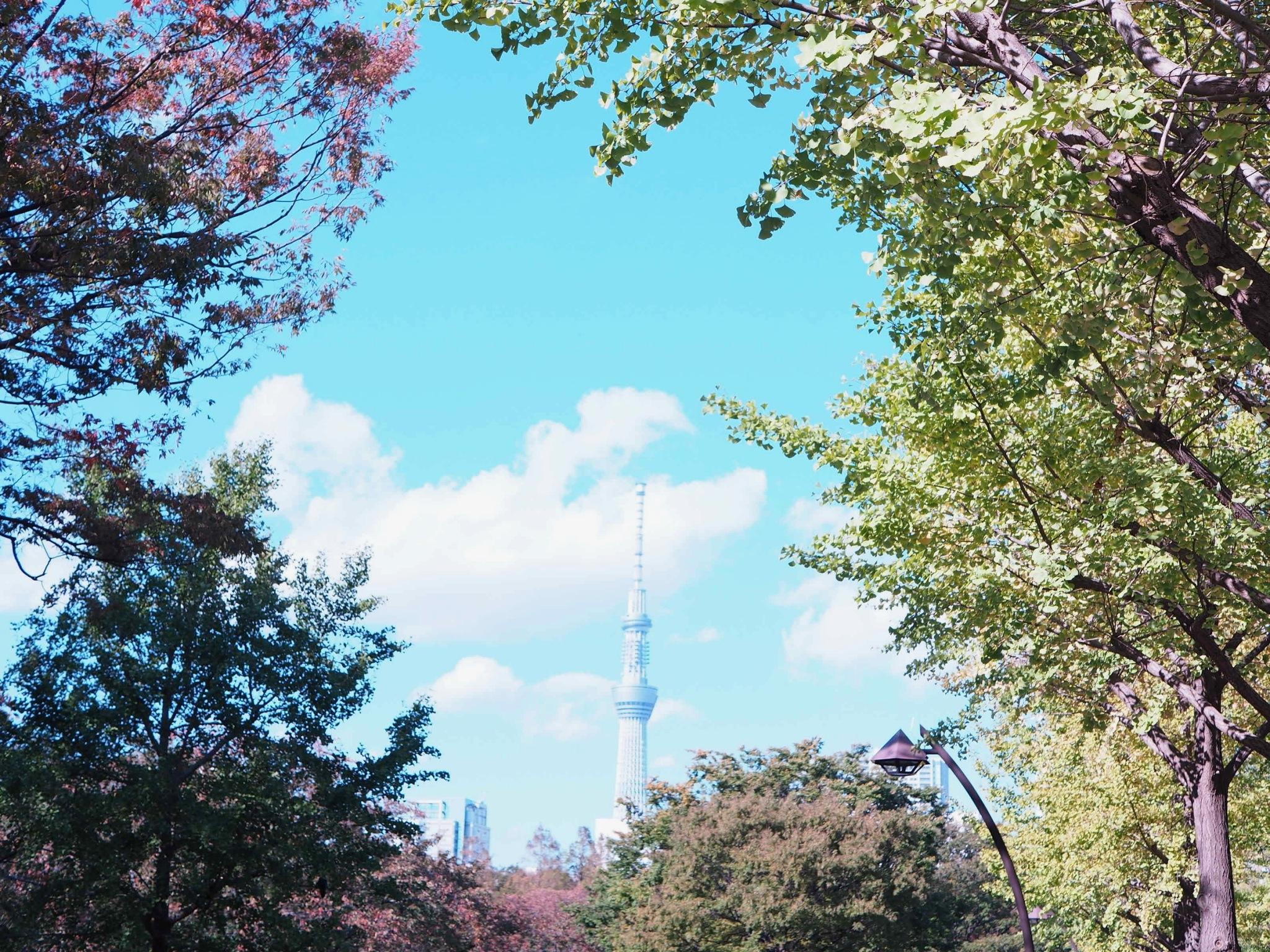 【都内サイング♩】秋晴れの日に #ドコモ・バイクシェア でお出かけしてみた♡_3