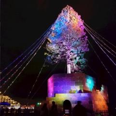 兵庫県は今、神戸がホットスポット☆ 開港150周年&世界一のクリスマスツリー ☆