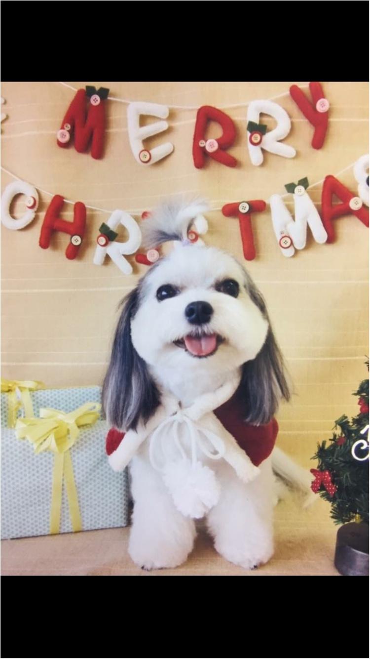 【今日のわんこ】メリークリスマス! 太郎くんサンタがやってきた♡_1
