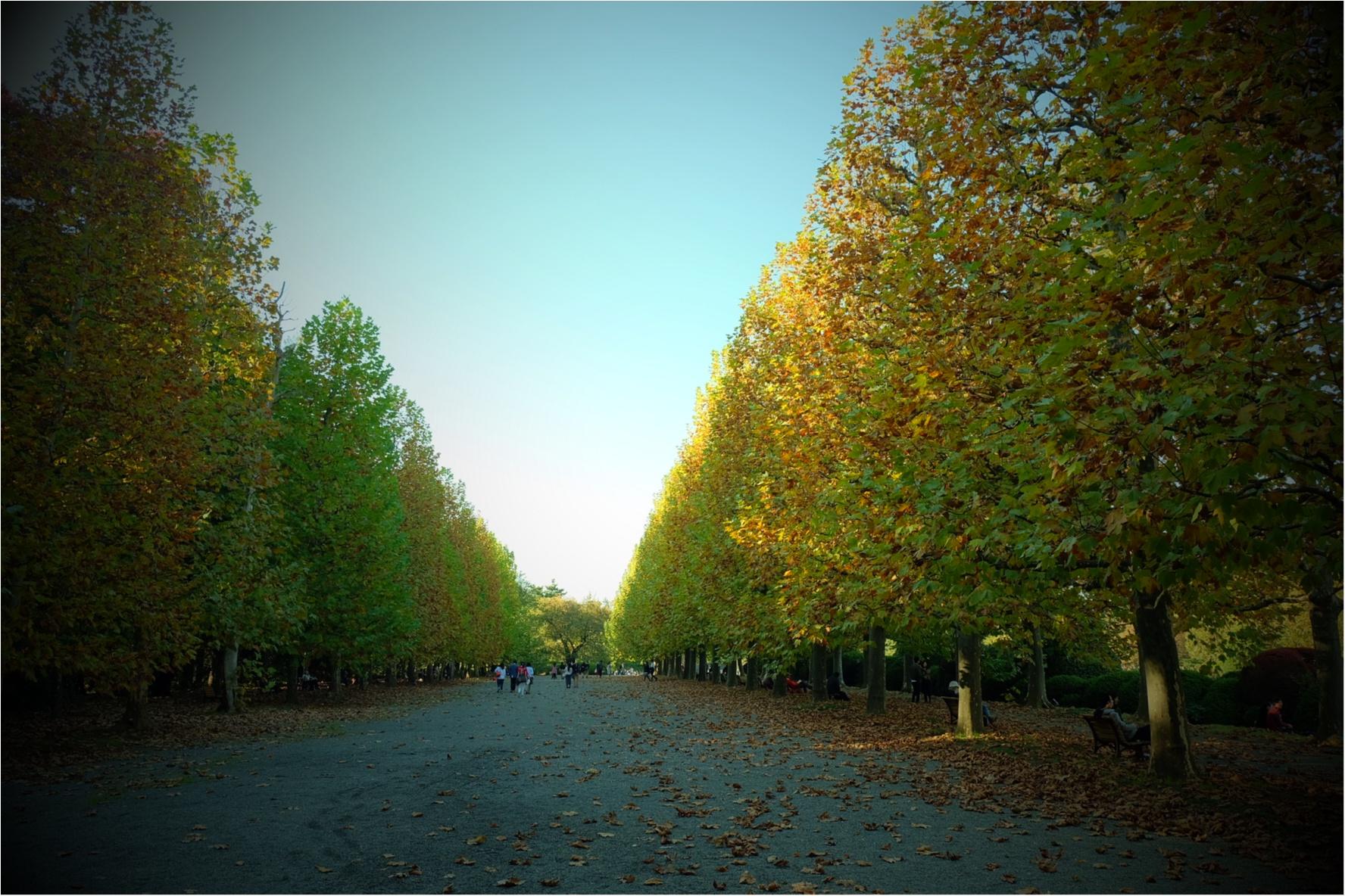 東京でも絶景の紅葉が!《新宿御苑》で秋が始められますよ〜!!フォトスポット&コーディネートも合わせてご紹介!_2