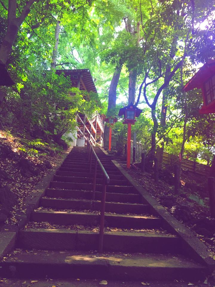 【癒しスポット】東京のオアシス。仕事に疲れたときは森林浴でリフレッシュ!_7