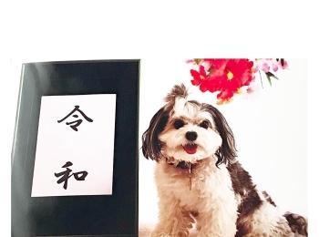 """【今日のわんこ】元号""""令和""""の記念に撮影した太郎くん"""