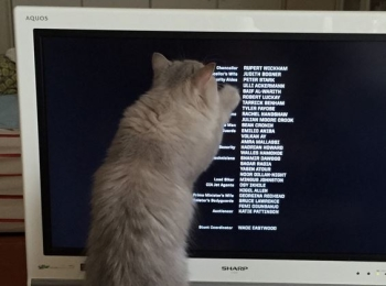 【今日のにゃんこ】とあるPCの画面を見て、大興奮のココンちゃん。