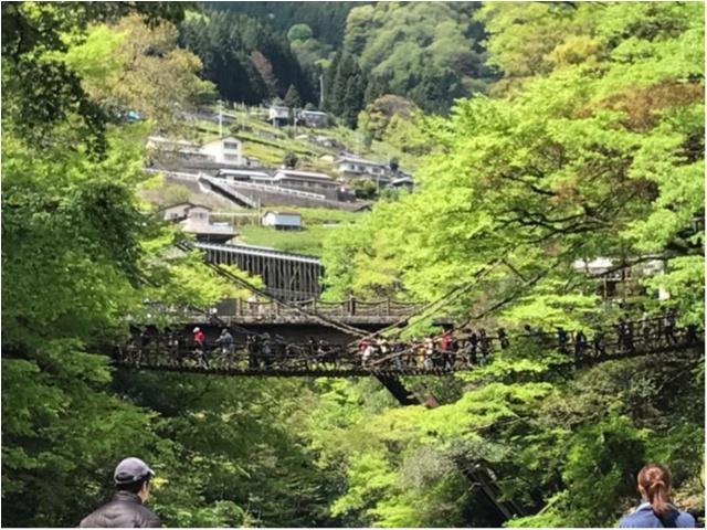 【一度は行きたい日本の絶景】徳島・祖谷のかずら橋_8