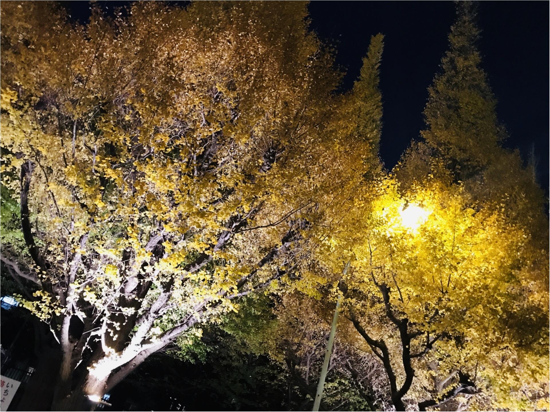 【紅葉スポット】美しすぎる黄色のトンネル《神宮外苑イチョウ並木》今が見頃です♡_5