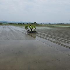 田植えが無事終わりました! 【#モアチャレ 農業女子】