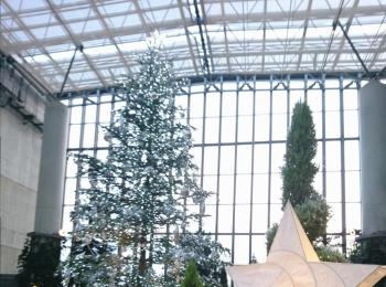 クリスマスシーズンに家族&カップルにお勧め!植物と光に彩られた奇跡の植物館