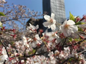 【歌舞伎のススメ*其の11】YouTubeで歌舞伎を全編無料配信?! 上演中止になった幻の三月歌舞伎がおうちで観られます♡
