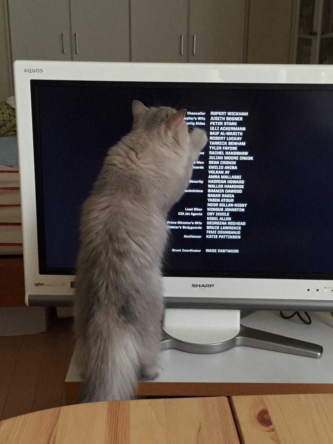 【今日のにゃんこ】とあるPCの画面を見て、大興奮のココンちゃん。_1