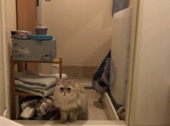 【今日のにゃんこ】お風呂好きなココンちゃん