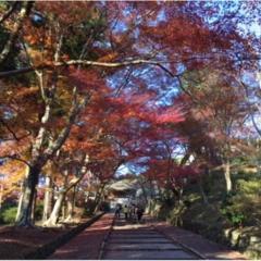 【京都のおすすめ紅葉スポット】毘沙門堂