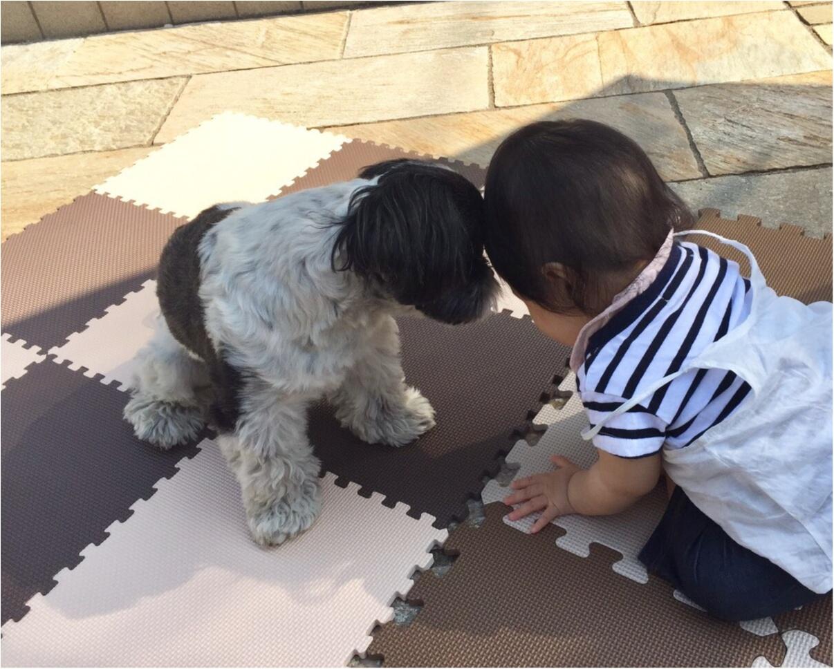 【今日のわんこ】ぼくお兄ちゃんなの♡ 赤ちゃんに会ったアイビーくん_1
