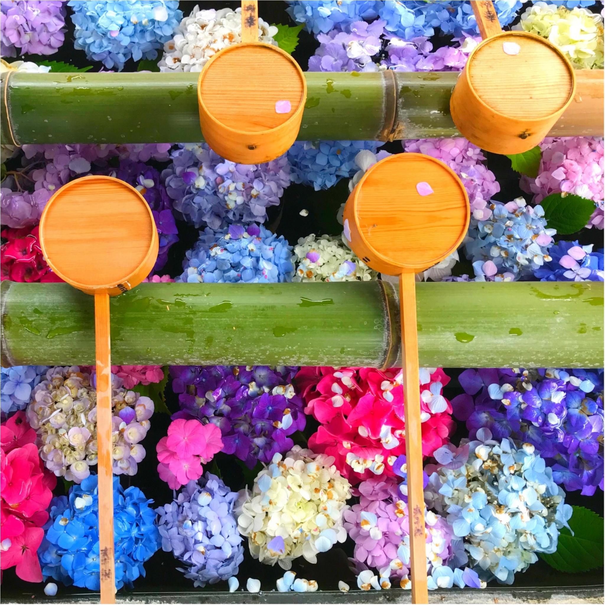 今日【7/1】まで!! 京都のフォトジェニックすぎるイベントとは? 今週の「ご当地モア」ランキング、エリア別第1位を発表!_5