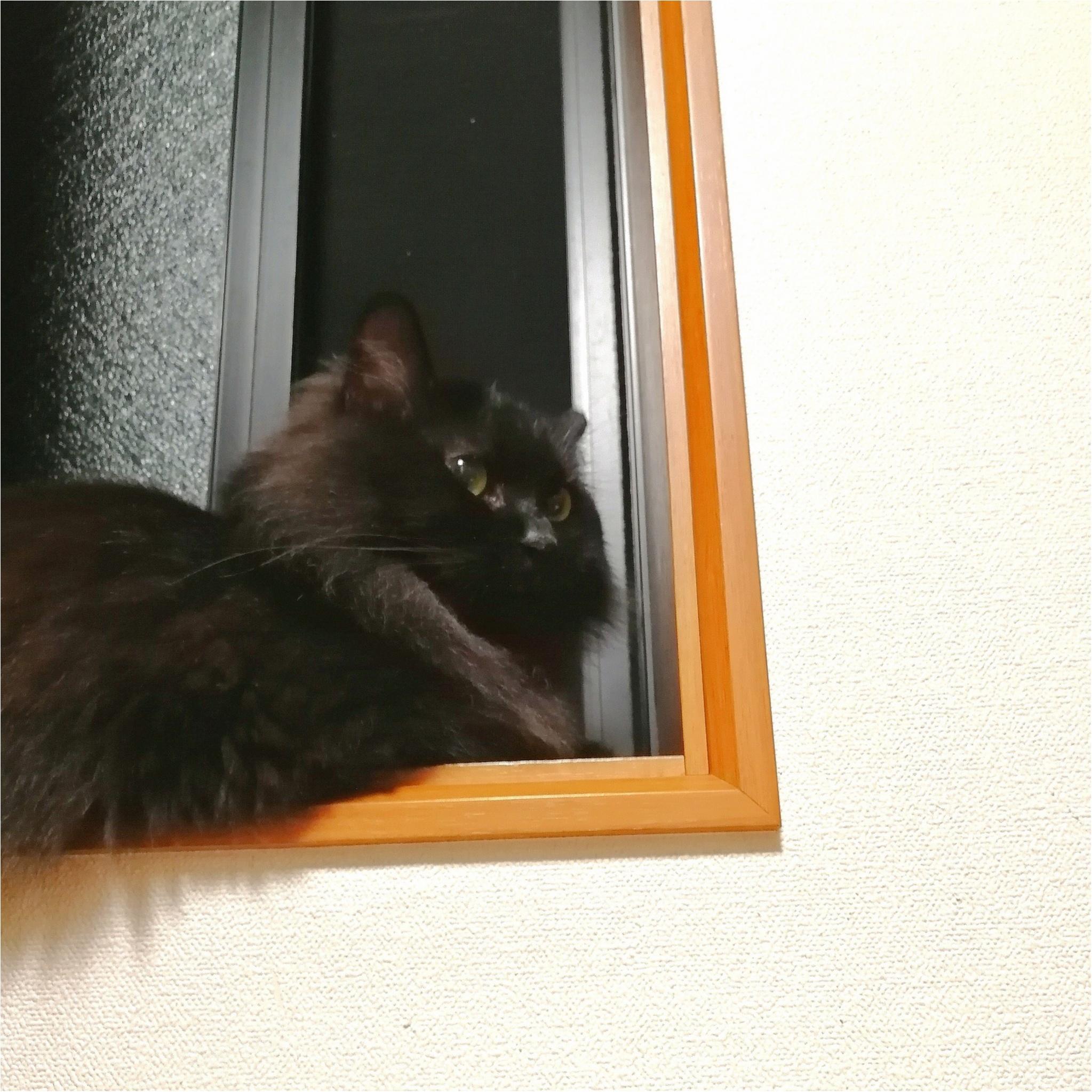 【今日のにゃんこ】秋の夜長♡ ゆらちゃんは窓辺でお月見_1