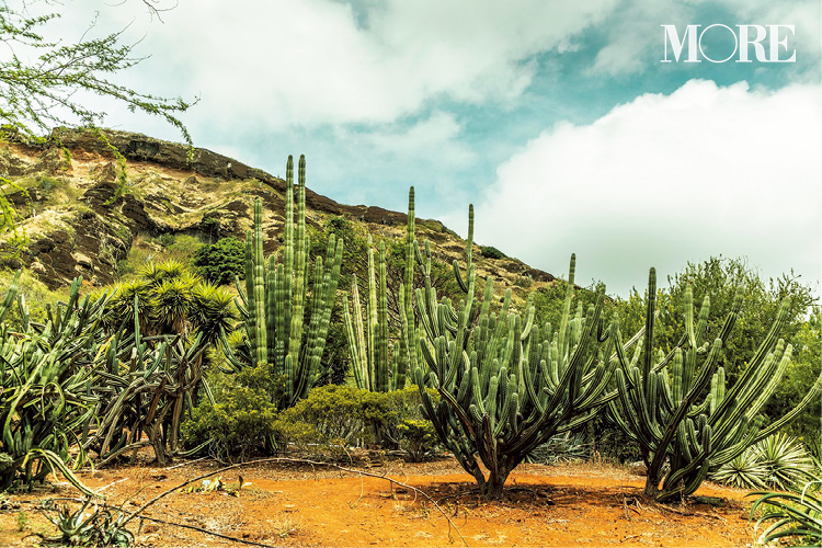 「ハワイの絶景スポット」4選♡ カイルアビーチを見下ろす高台や、話題のパワースポットなど、大自然に癒される旅行をしよう!_3