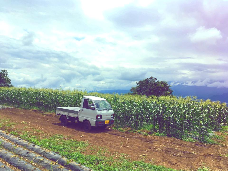 【HISバスツアー】60万本の奇跡!明野ひまわり畑と「清里テラス」&収穫体験ツアー_7
