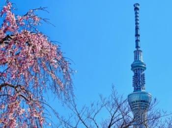 桜の名所・隅田公園はスカイツリーも! サンドイッチが絶品な、葉山のおしゃれカフェ【今週のモアハピ部ライフスタイル人気ランキング】