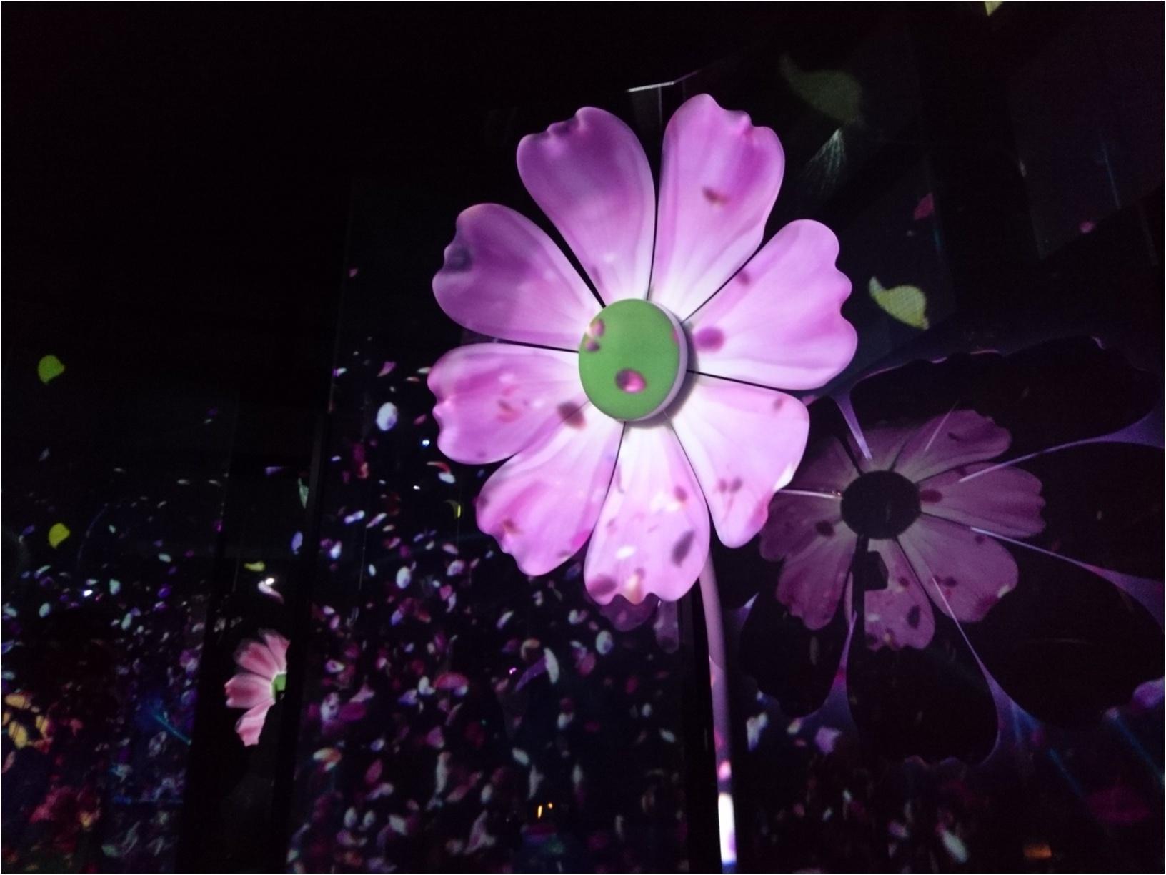 ≪京都・二条城≫先進アートとコラボ! 花がモチーフflowers by nakedライトアップ☆_4